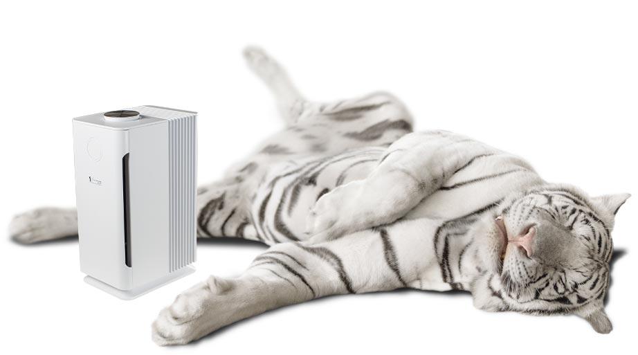 lumitenso-lca-80_tiger